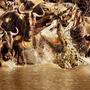 "Marius de Vries - 「Ancient Dragons」が彩る、""荒れ狂う激流""/『ネイチャー』-(C)BBC Earth Productions (Africa) Limited and Reliance Prodco EK LLC 2014"
