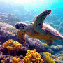 『ネイチャー』-(C) BBC Earth Productions (Africa) Limited and Reliance Prodco EK LLC 2014