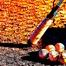 引退の日ハム稲葉と金子をソフトバンク選手らが胴上げ「感動した!」 画像
