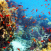 『ネイチャー』-(C)BBC Earth Productions (Africa) Limited and Reliance Prodco EK LLC 2014